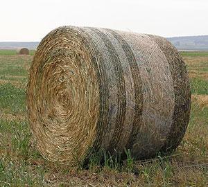 Siatka rolnicza
